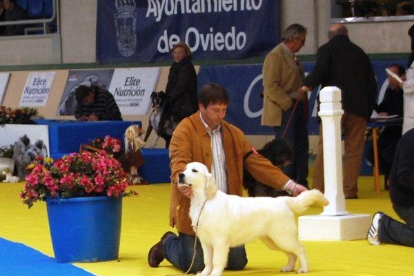exposicion canina golden fourgeron